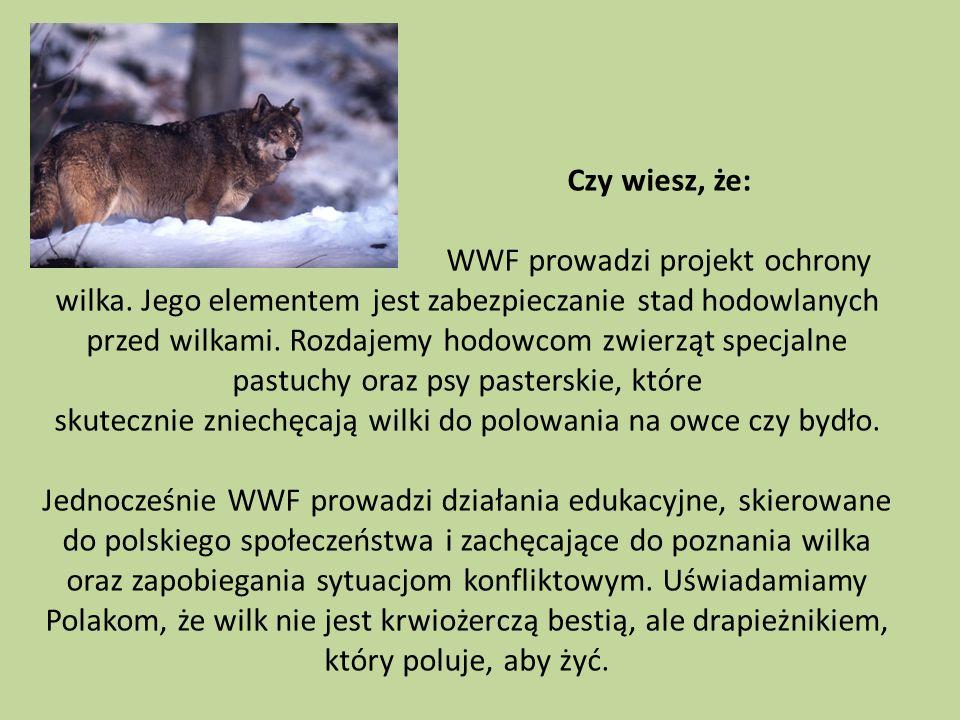 Czy wiesz, że: WWF prowadzi projekt ochrony wilka. Jego elementem jest zabezpieczanie stad hodowlanych przed wilkami. Rozdajemy hodowcom zwierząt spec