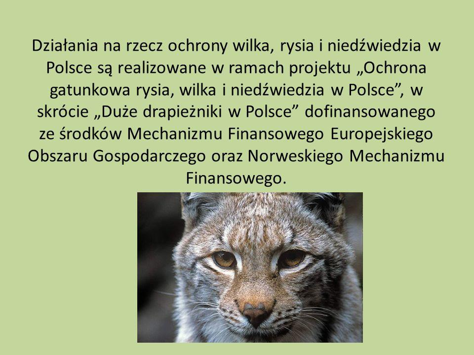 Działania na rzecz ochrony wilka, rysia i niedźwiedzia w Polsce są realizowane w ramach projektu Ochrona gatunkowa rysia, wilka i niedźwiedzia w Polsc