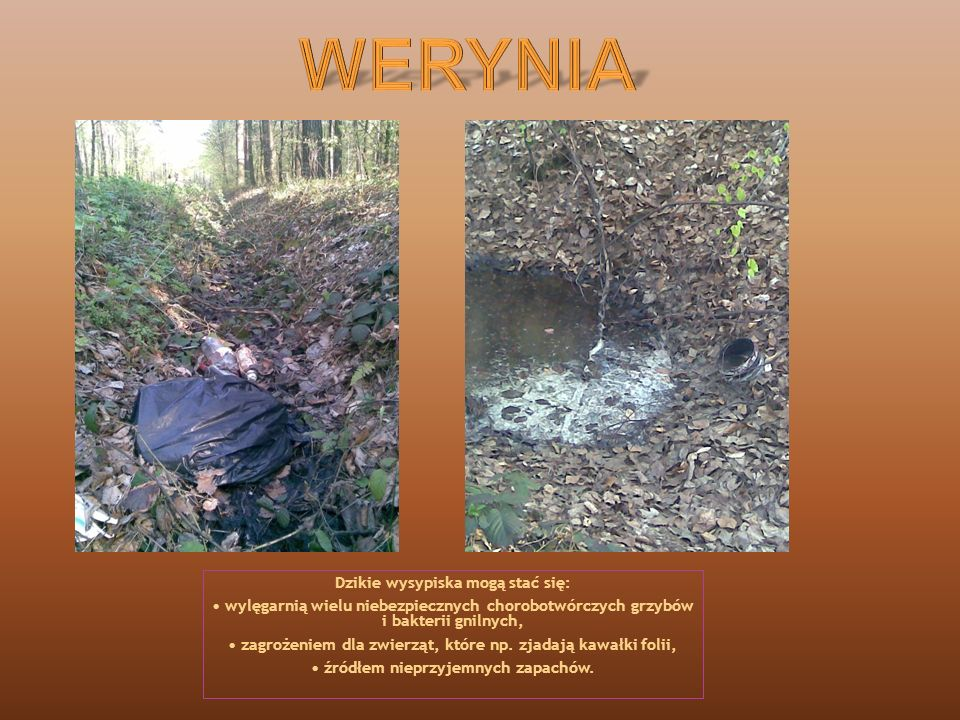 Składowane śmieci nie tylko wpływają niekorzystnie na cechy krajobrazowe, ale również bardzo silnie oddziałują z otoczeniem, powodując skażenie powietrza, gleby i wody.