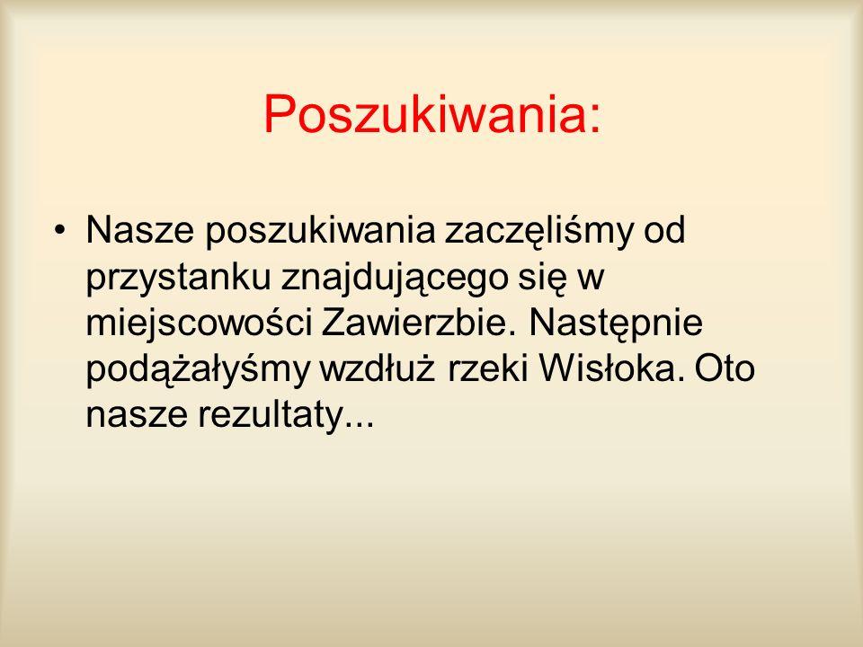 Poszukiwania: Nasze poszukiwania zaczęliśmy od przystanku znajdującego się w miejscowości Zawierzbie. Następnie podążałyśmy wzdłuż rzeki Wisłoka. Oto