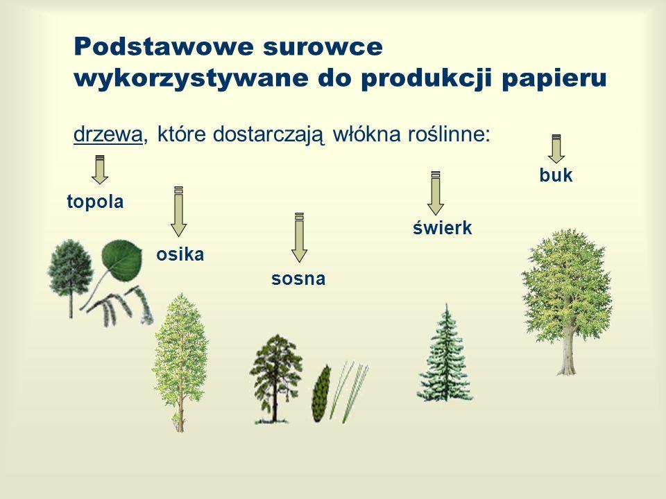 Podstawowe surowce wykorzystywane do produkcji papieru drzewa, które dostarczają włókna roślinne: topola buk świerk osika sosna