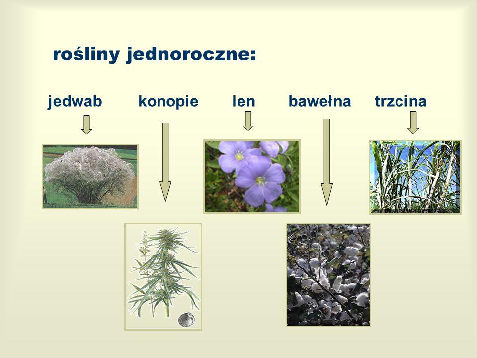 rośliny jednoroczne: jedwablenkonopiebawełnatrzcina