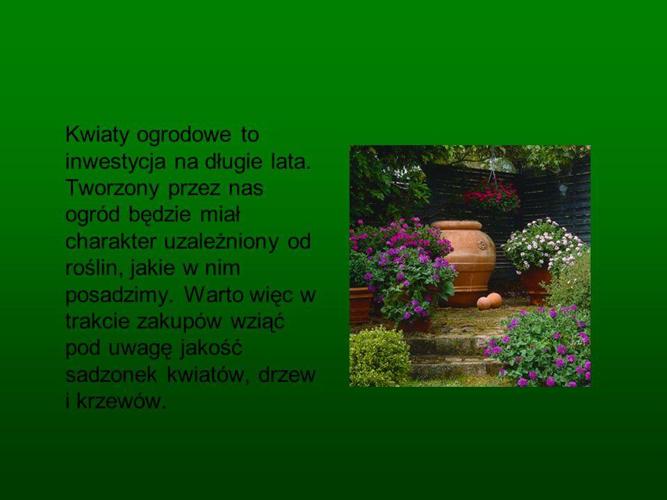 Kupowane przez na kwiaty ogrodowe koniecznie powinny być w jeszcze w punkcie sprzedaży wolne od jakichkolwiek chorób i szkodników.