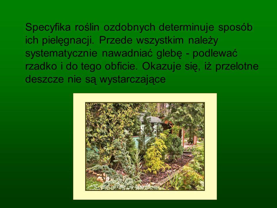 Specyfika roślin ozdobnych determinuje sposób ich pielęgnacji.