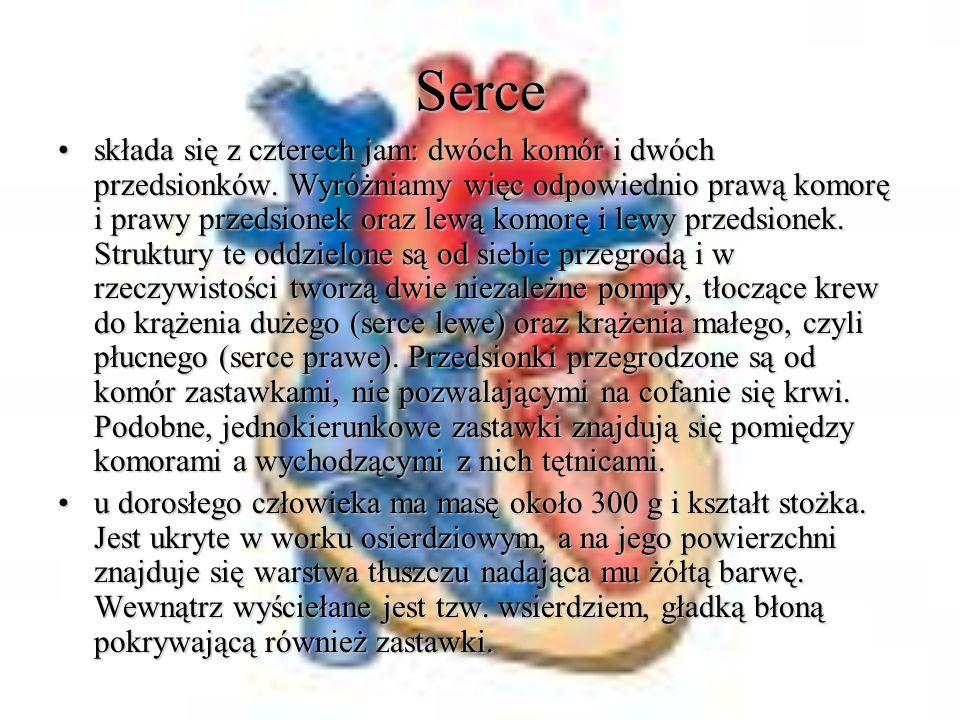 Serce składa się z czterech jam: dwóch komór i dwóch przedsionków. Wyróżniamy więc odpowiednio prawą komorę i prawy przedsionek oraz lewą komorę i lew