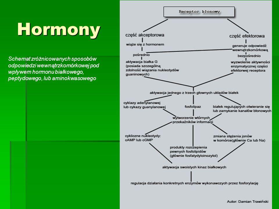 Hormony Schemat zróżnicowanych sposobów odpowiedzi wewnątrzkomórkowej pod wpływem hormonu białkowego, peptydowego, lub aminokwasowego