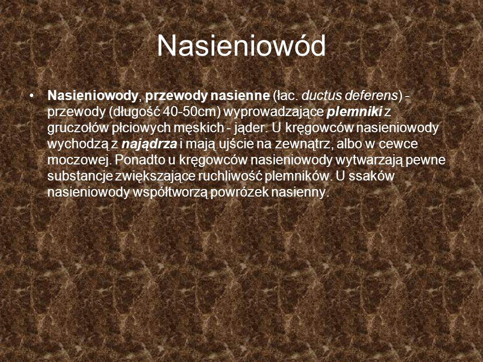 Nasieniowód Nasieniowody, przewody nasienne (łac. ductus deferens) - przewody (długość 40-50cm) wyprowadzające plemniki z gruczołów płciowych męskich