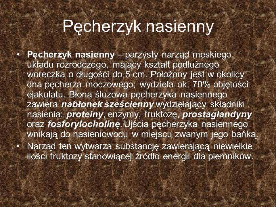 Pęcherzyk nasienny Pęcherzyk nasienny – parzysty narząd męskiego układu rozrodczego, mający kształt podłużnego woreczka o długości do 5 cm. Położony j