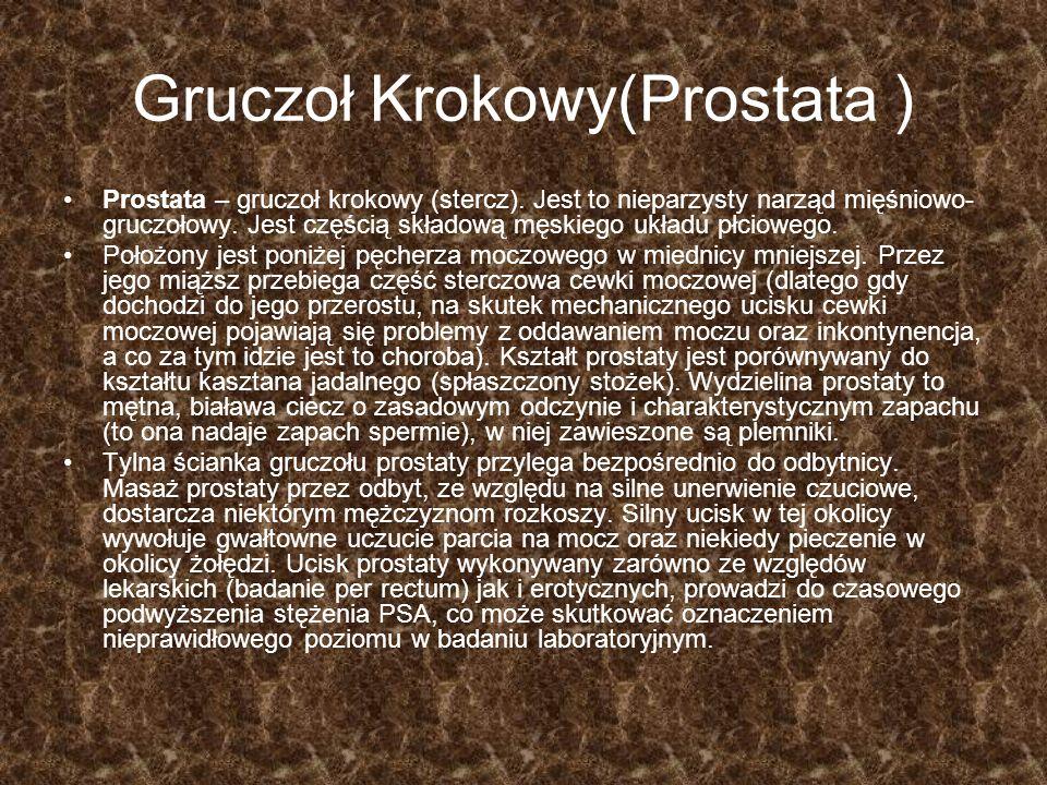 Gruczoł Krokowy(Prostata ) Prostata – gruczoł krokowy (stercz). Jest to nieparzysty narząd mięśniowo- gruczołowy. Jest częścią składową męskiego układ
