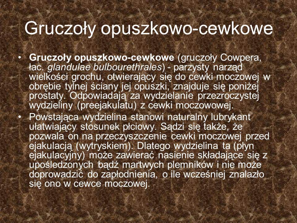 Gruczoły opuszkowo-cewkowe Gruczoły opuszkowo-cewkowe (gruczoły Cowpera, łac. glandulae bulbourethrales) - parzysty narząd wielkości grochu, otwierają