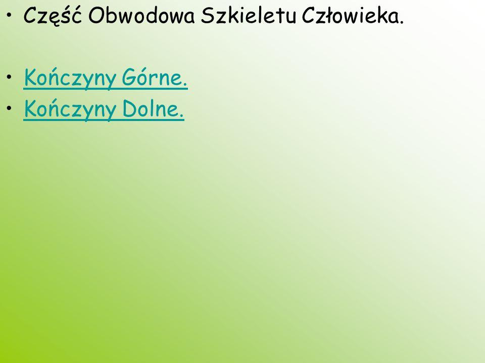 Część Obwodowa Szkieletu Człowieka. Kończyny Górne. Kończyny Dolne.