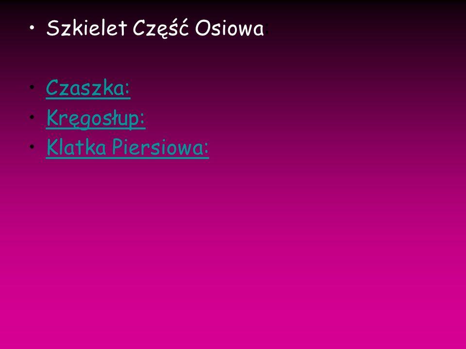 Szkielet Część Osiowa: Czaszka: Kręgosłup: Klatka Piersiowa: