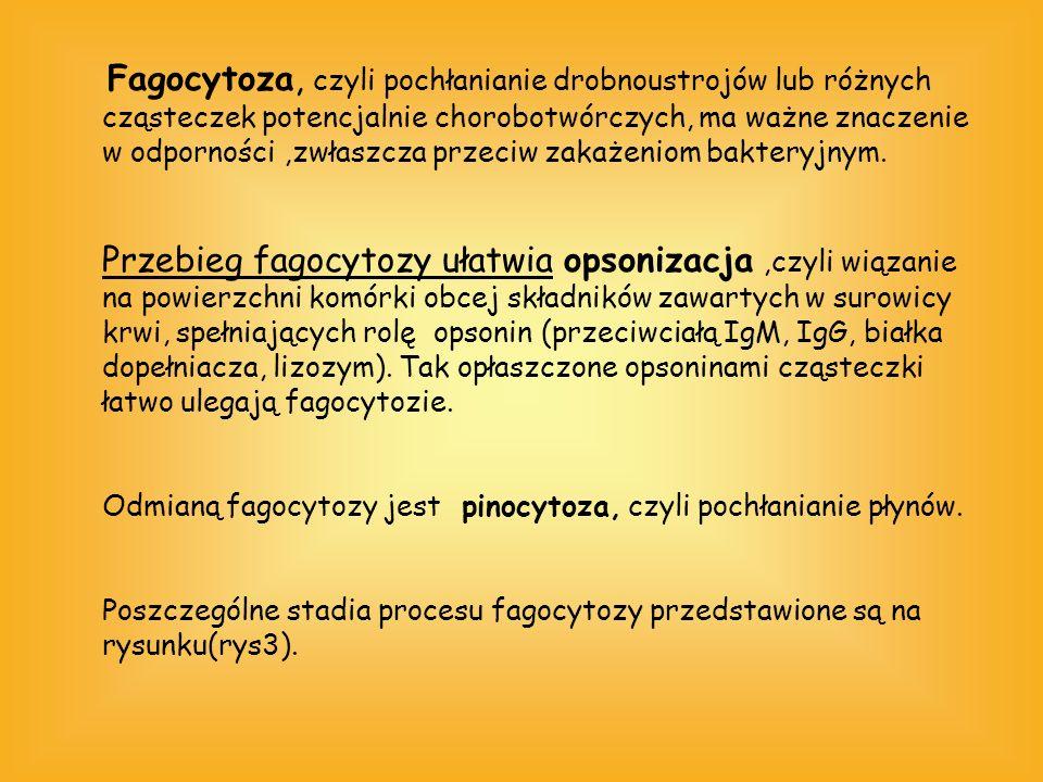 Fagocytoza, czyli pochłanianie drobnoustrojów lub różnych cząsteczek potencjalnie chorobotwórczych, ma ważne znaczenie w odporności,zwłaszcza przeciw