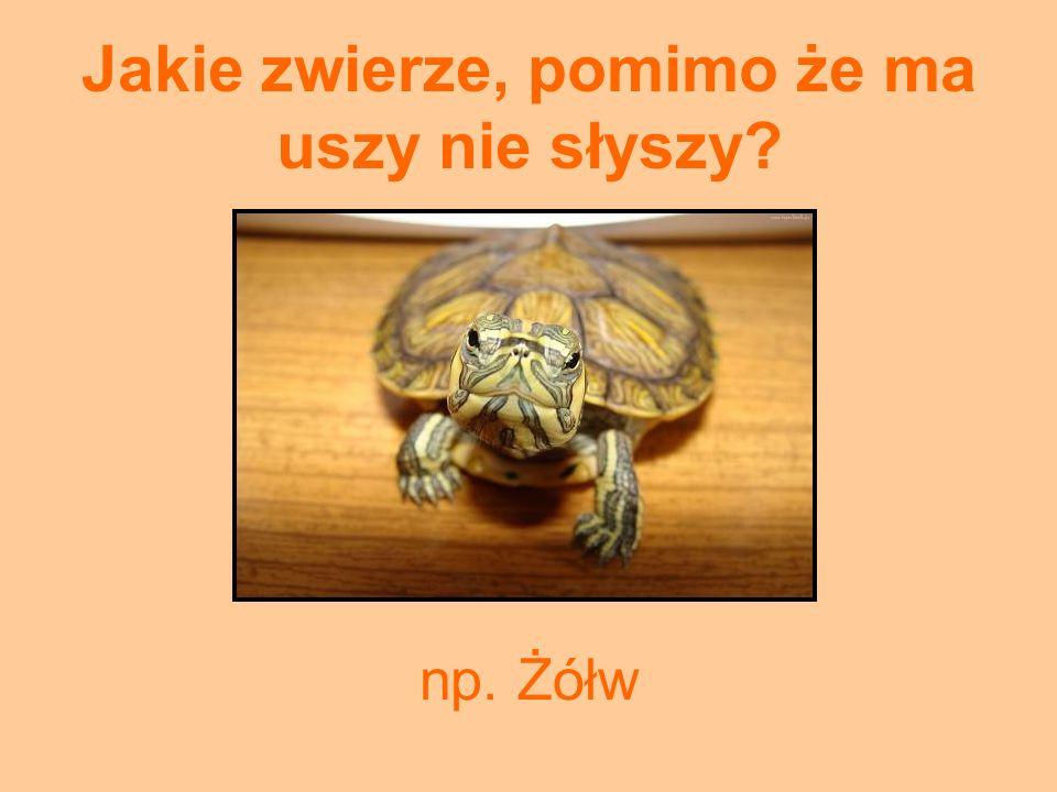 Jakie zwierze, pomimo że ma uszy nie słyszy? np. Żółw