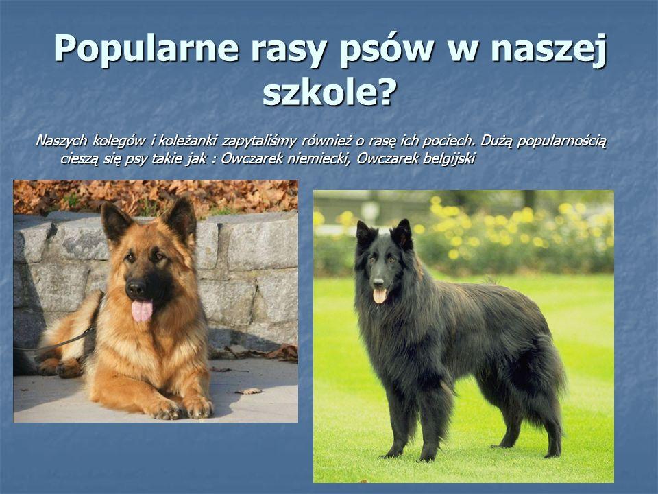 Popularne rasy psów w naszej szkole? Naszych kolegów i koleżanki zapytaliśmy również o rasę ich pociech. Dużą popularnością cieszą się psy takie jak :