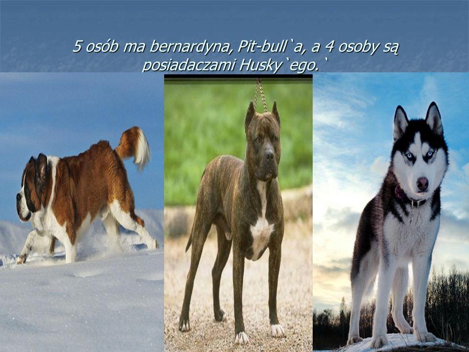5 osób ma bernardyna, Pit-bull`a, a 4 osoby są posiadaczami Husky`ego.`