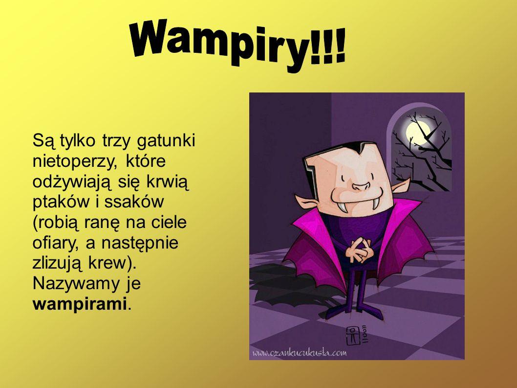 Są tylko trzy gatunki nietoperzy, które odżywiają się krwią ptaków i ssaków (robią ranę na ciele oary, a następnie zlizują krew). Nazywamy je wampiram