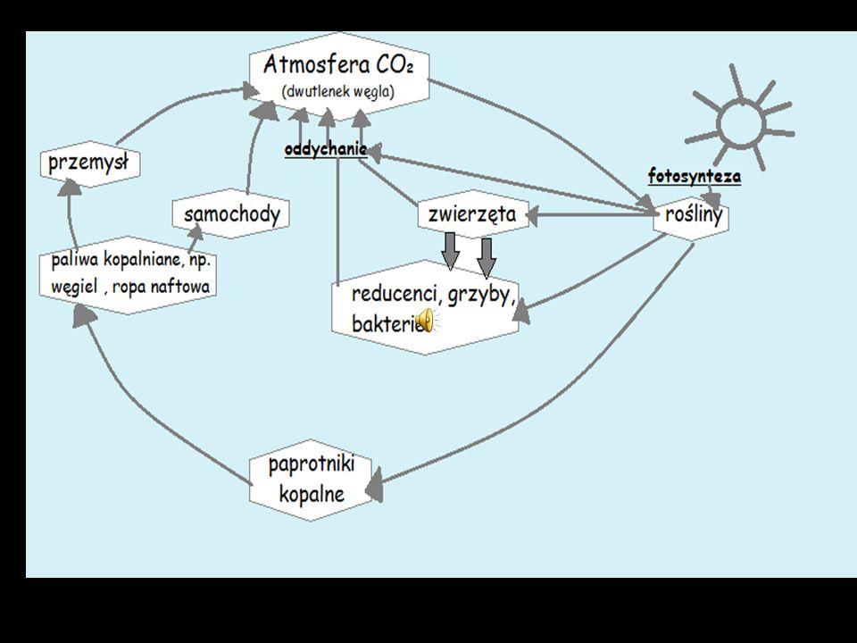 Węgiel jest podstawowym pierwiastkiem budulcowym związków organicznych.