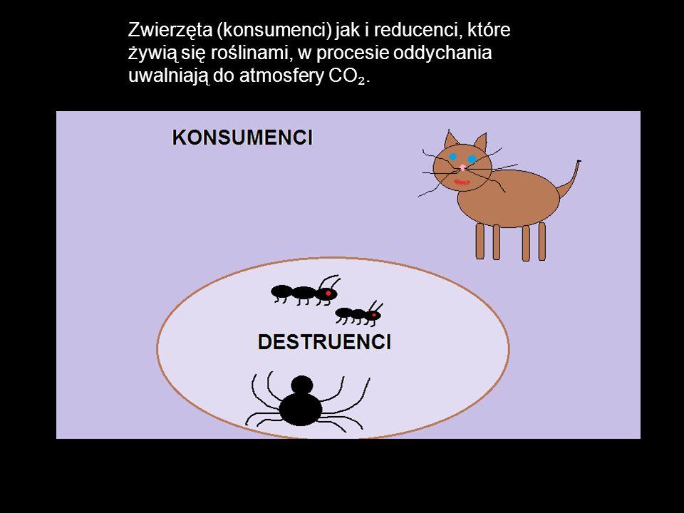 Tak oto węgiel obiega cały ekosystem.
