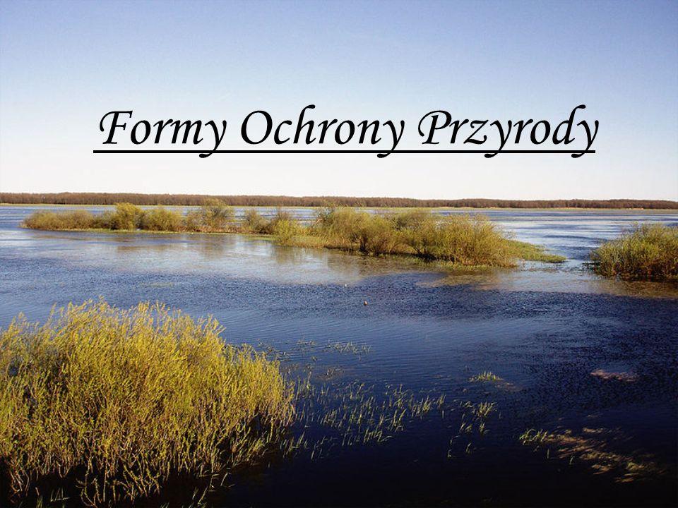 Ochrona Przyrody - Historia - W Polsce działania mające na celu ochronę przyrody mają długą, bo wywodzącą się ze średniowiecza tradycję.