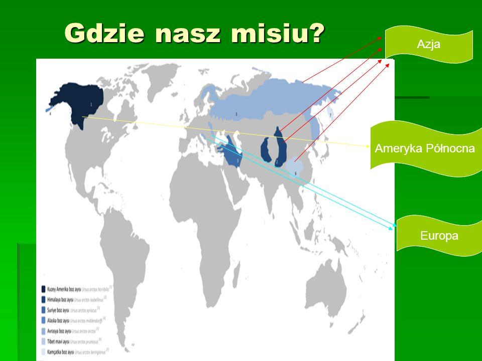Gdzie nasz misiu? Azja Ameryka Północna Europa