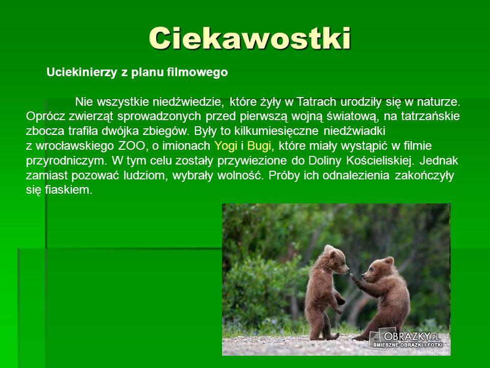 Ciekawostki Uciekinierzy z planu filmowego Nie wszystkie niedźwiedzie, które żyły w Tatrach urodziły się w naturze. Oprócz zwierząt sprowadzonych prze