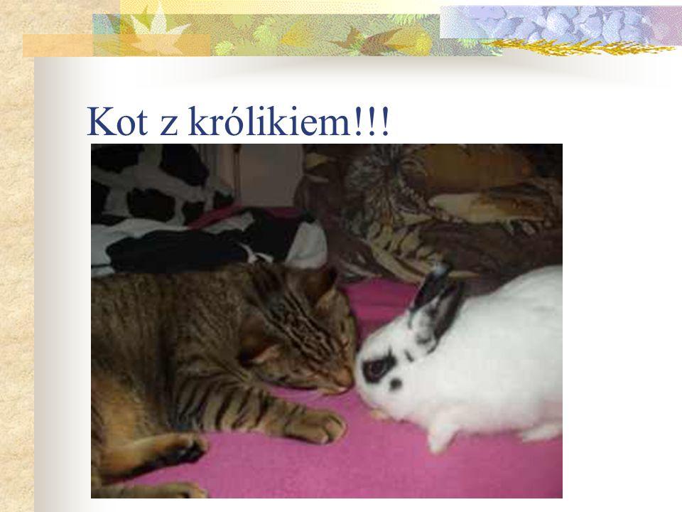 Kot z królikiem!!!