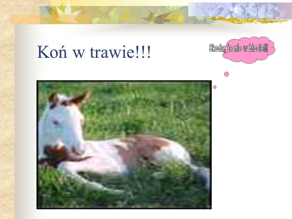 Koń w trawie!!!