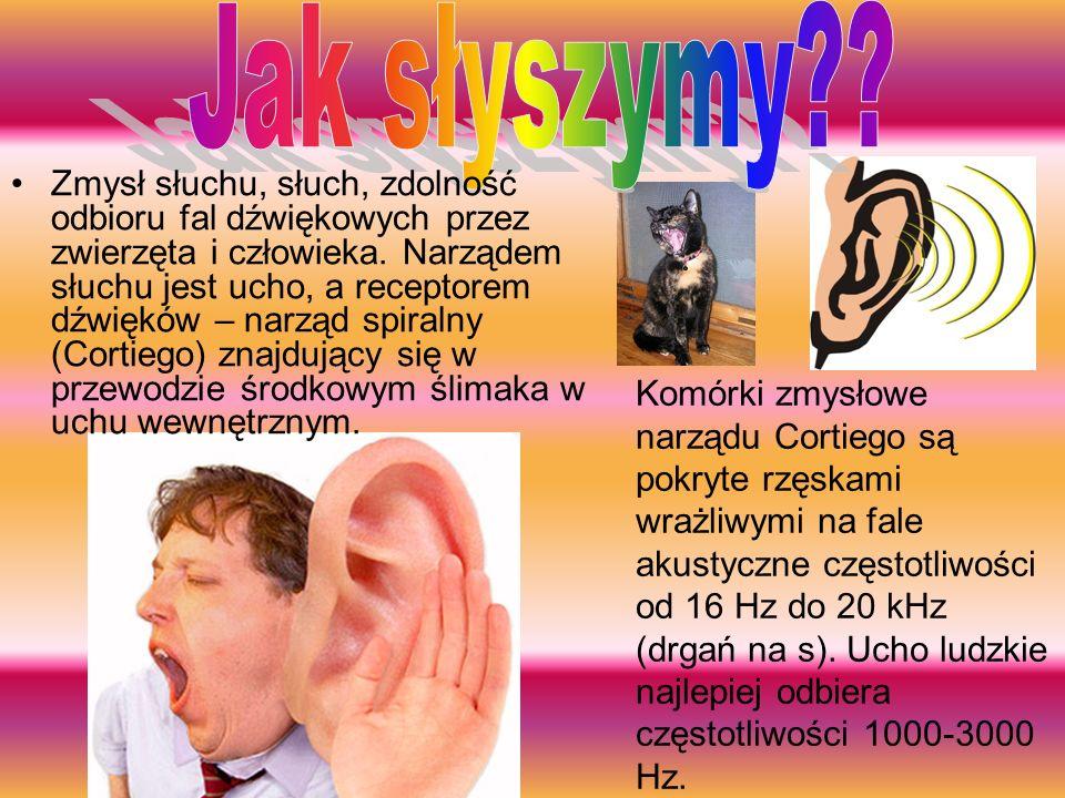 Ucho jest zbudowane z ślimaka, okienka owalnego, błona bębenkowego, okienka okrągłego, trąbki Eustachiusza, kowadełka,strze miączka, kanałów półkolist