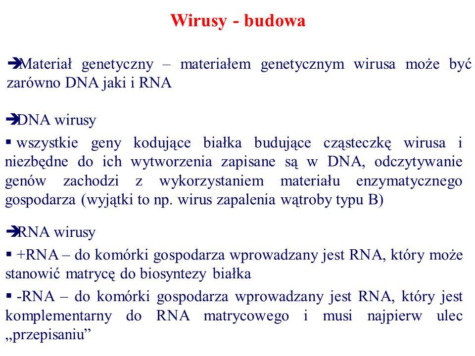 Wirusy - budowa Materiał genetyczny – materiałem genetycznym wirusa może być zarówno DNA jaki i RNA DNA wirusy wszystkie geny kodujące białka budujące