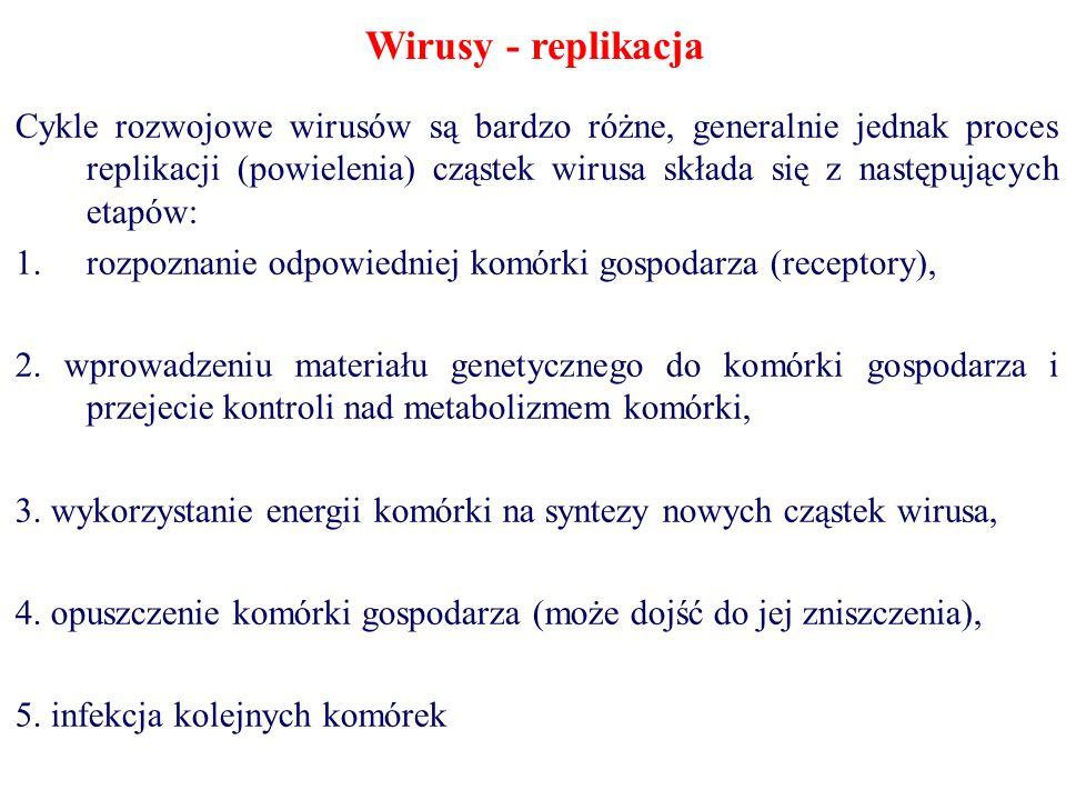 Wirusy - replikacja Cykle rozwojowe wirusów są bardzo różne, generalnie jednak proces replikacji (powielenia) cząstek wirusa składa się z następującyc