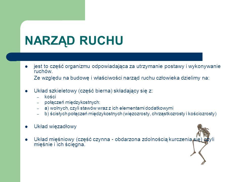 NARZĄD RUCHU jest to część organizmu odpowiadająca za utrzymanie postawy i wykonywanie ruchów. Ze względu na budowę i właściwości narząd ruchu człowie
