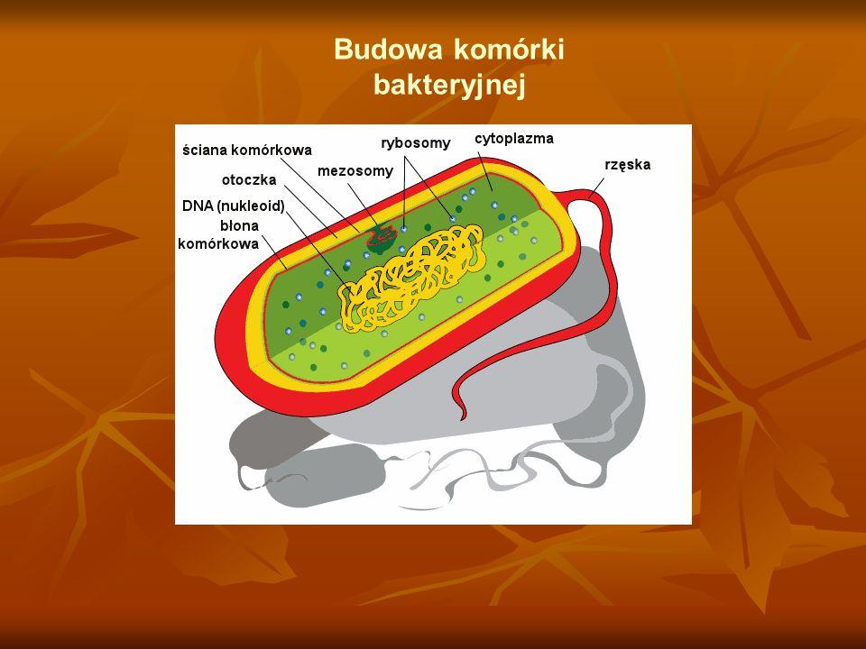Budowa komórki bakteryjnej