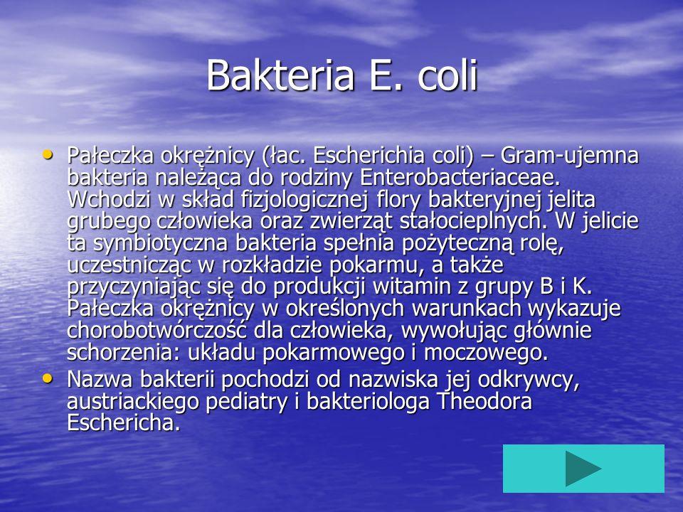 Bakteria E. coli Pałeczka okrężnicy (łac. Escherichia coli) – Gram-ujemna bakteria należąca do rodziny Enterobacteriaceae. Wchodzi w skład fizjologicz