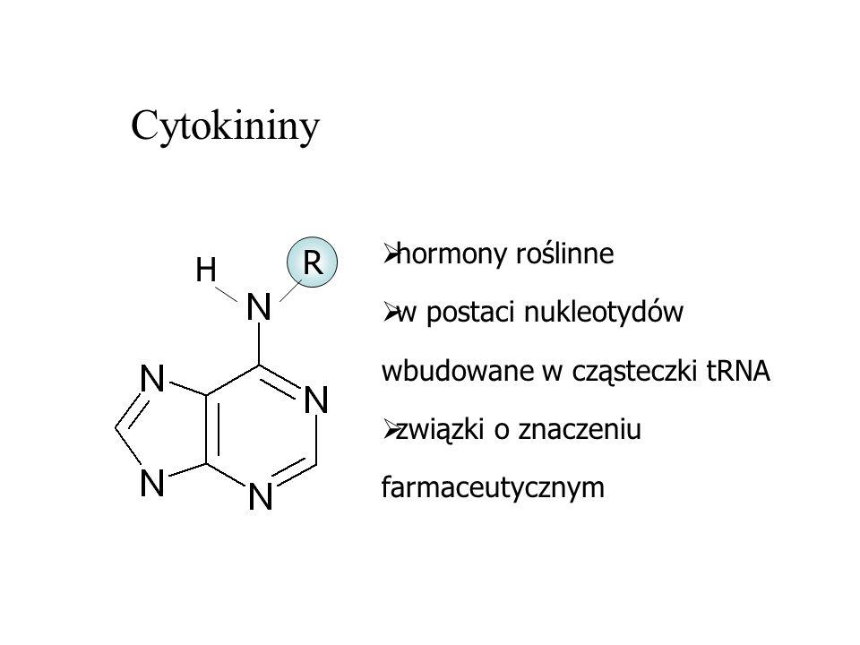 Cytokininy H R hormony roślinne w postaci nukleotydów wbudowane w cząsteczki tRNA związki o znaczeniu farmaceutycznym
