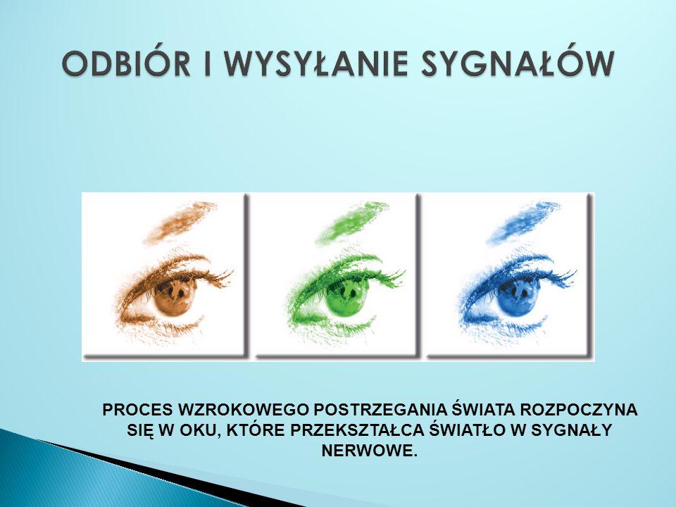 A - rogówka, B - tęczówka, C - komora przednia, D - źrenica, E - soczewka, F - plamka żółta, G - mięsień gałki ocznej, H - nerw wzrokowy, I - plamka ślepa, J - ciało szkliste, K - naczyniówka, L – siatkówka.