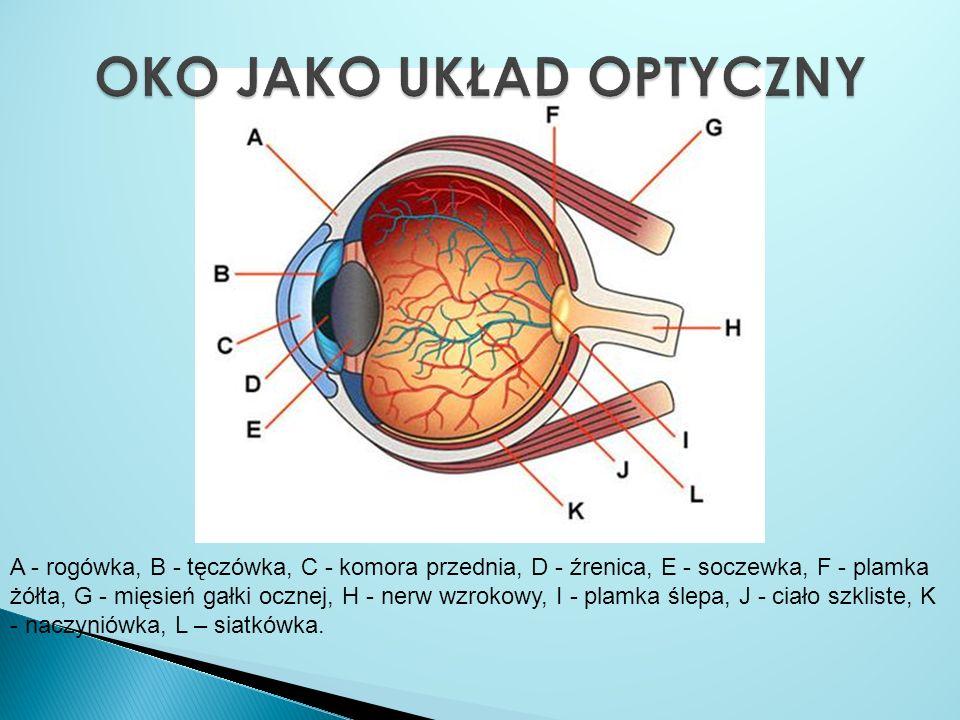 A - rogówka, B - tęczówka, C - komora przednia, D - źrenica, E - soczewka, F - plamka żółta, G - mięsień gałki ocznej, H - nerw wzrokowy, I - plamka ś