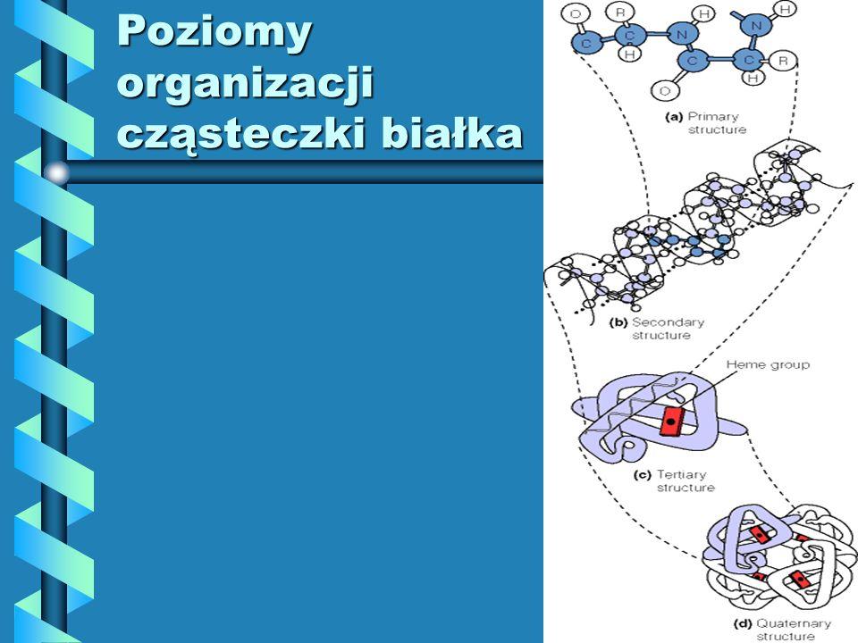 Poziomyorganizacji cząsteczki białka