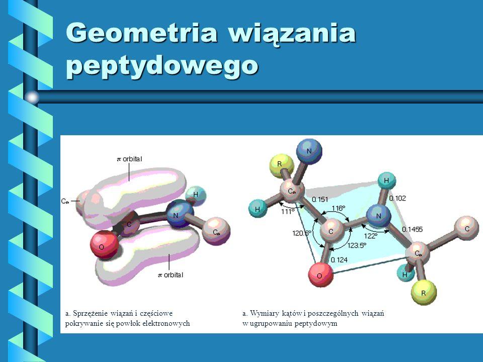 Geometria wiązania peptydowego a. Sprzężenie wiązań i częściowe pokrywanie się powłok elektronowych a. Wymiary kątów i poszczególnych wiązań w ugrupow