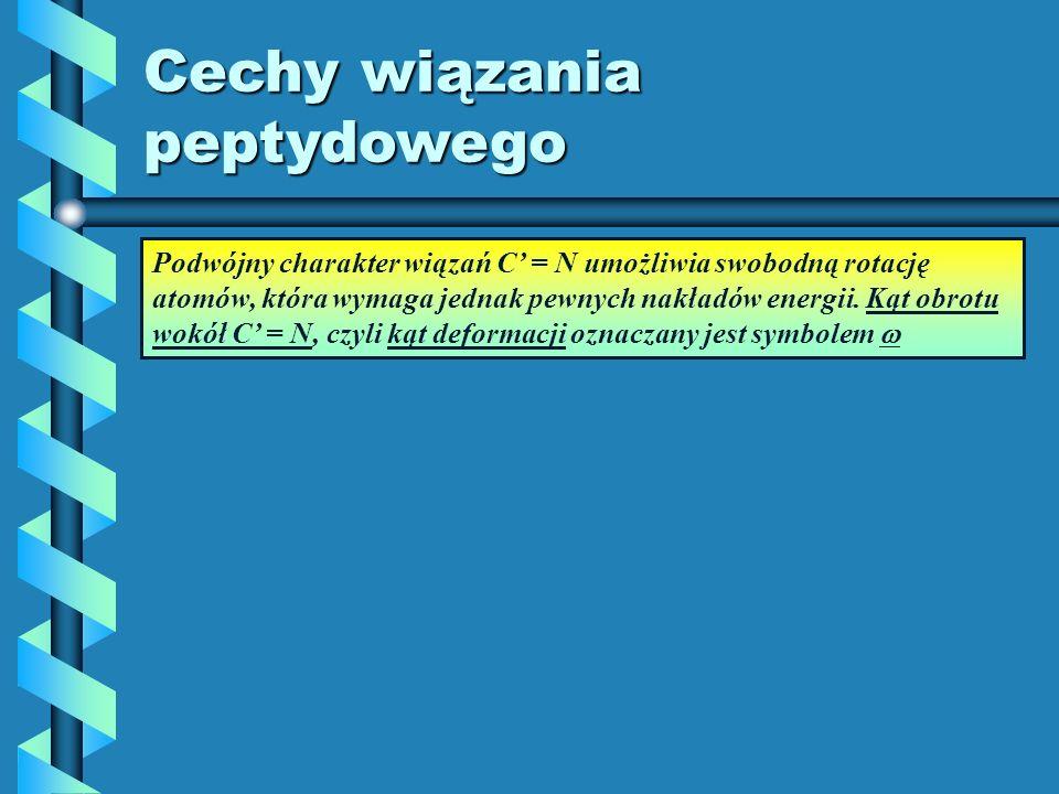Cechy wiązania peptydowego Podwójny charakter wiązań C = N umożliwia swobodną rotację atomów, która wymaga jednak pewnych nakładów energii. Kąt obrotu