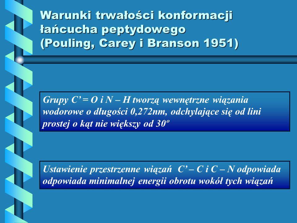 Warunki trwałości konformacji łańcucha peptydowego (Pouling, Carey i Branson 1951) Grupy C = O i N – H tworzą wewnętrzne wiązania wodorowe o długości