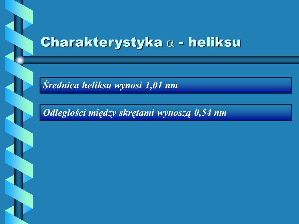 Charakterystyka - heliksu Średnica heliksu wynosi 1,01 nm Odległości między skrętami wynoszą 0,54 nm
