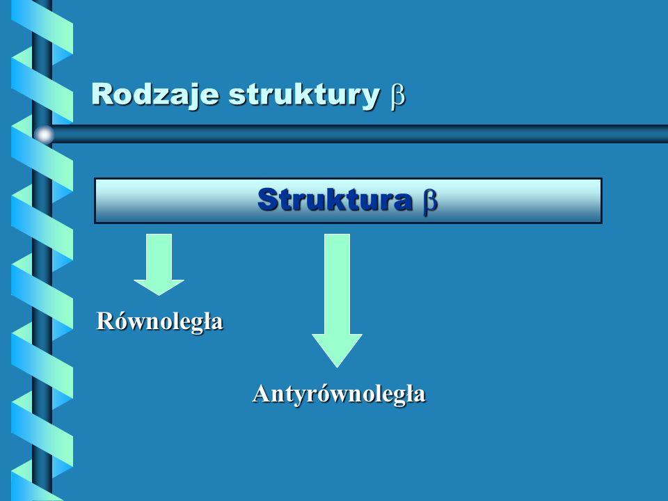 Rodzaje struktury Rodzaje struktury Struktura Struktura Równoległa Antyrównoległa