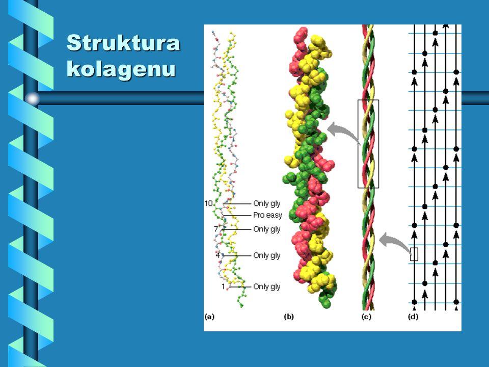 Strukturakolagenu