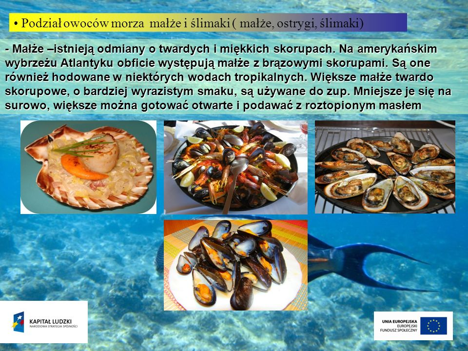 Podział owoców morza małże i ślimaki ( małże, ostrygi, ślimaki) - Małże –istnieją odmiany o twardych i miękkich skorupach. Na amerykańskim wybrzeżu At