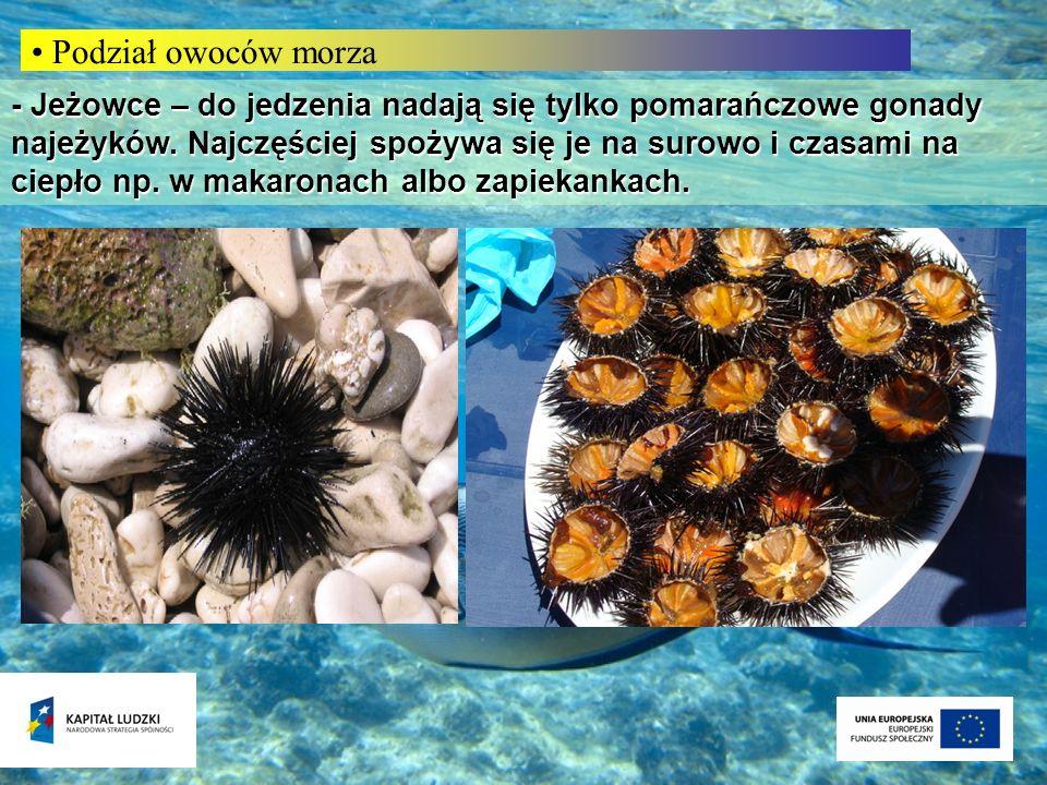 Podział owoców morza - Jeżowce – do jedzenia nadają się tylko pomarańczowe gonady najeżyków. Najczęściej spożywa się je na surowo i czasami na ciepło