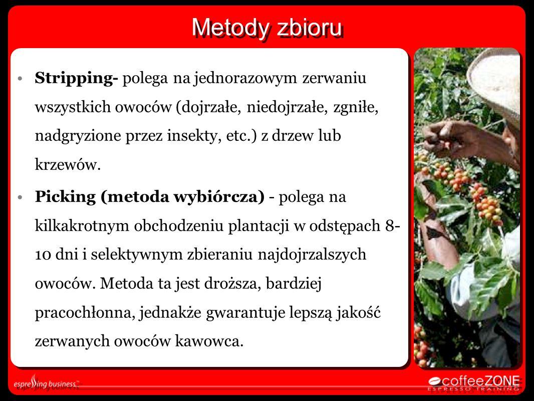Metody zbioru Stripping- polega na jednorazowym zerwaniu wszystkich owoców (dojrzałe, niedojrzałe, zgniłe, nadgryzione przez insekty, etc.) z drzew lu