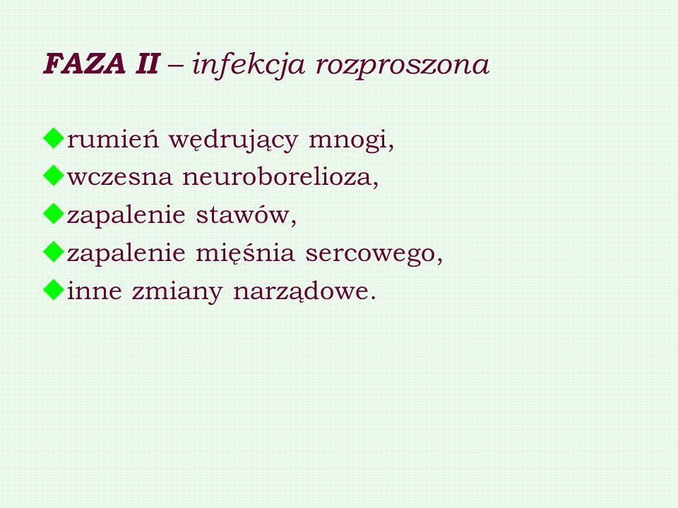 FAZA II – infekcja rozproszona rumień wędrujący mnogi, wczesna neuroborelioza, zapalenie stawów, zapalenie mięśnia sercowego, inne zmiany narządowe.