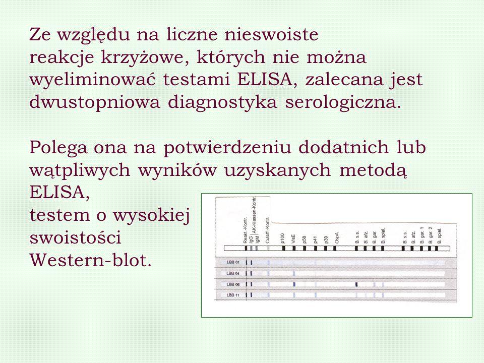 Ze względu na liczne nieswoiste reakcje krzyżowe, których nie można wyeliminować testami ELISA, zalecana jest dwustopniowa diagnostyka serologiczna. P