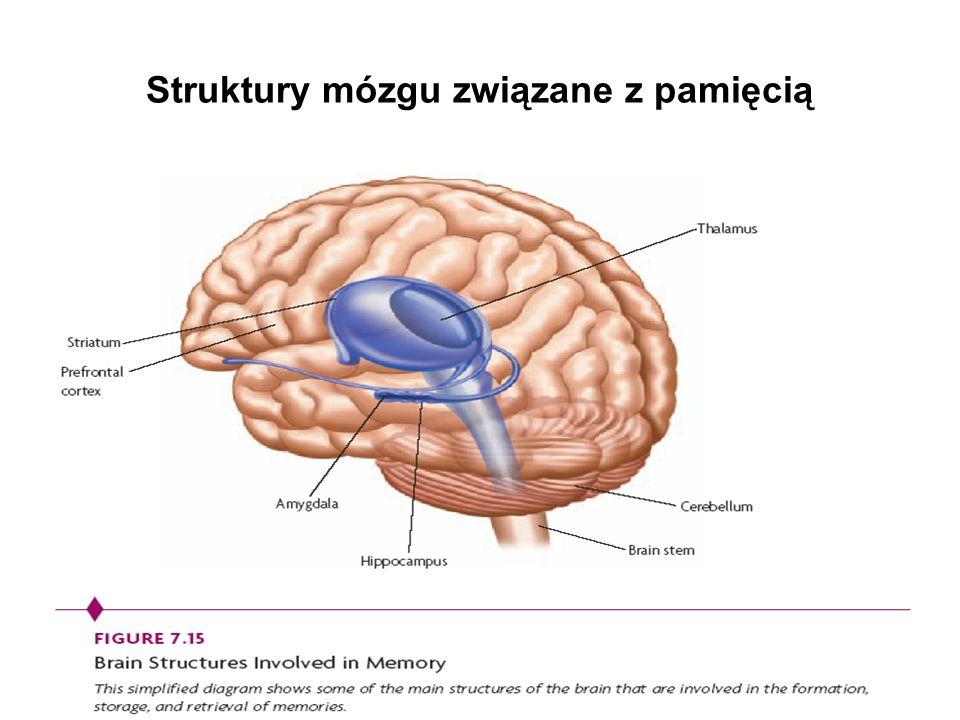 Struktury mózgu związane z pamięcią
